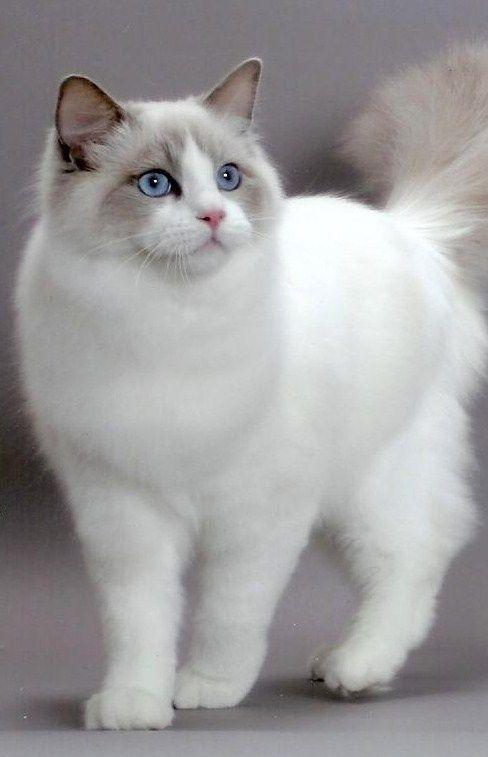 Cat perfection