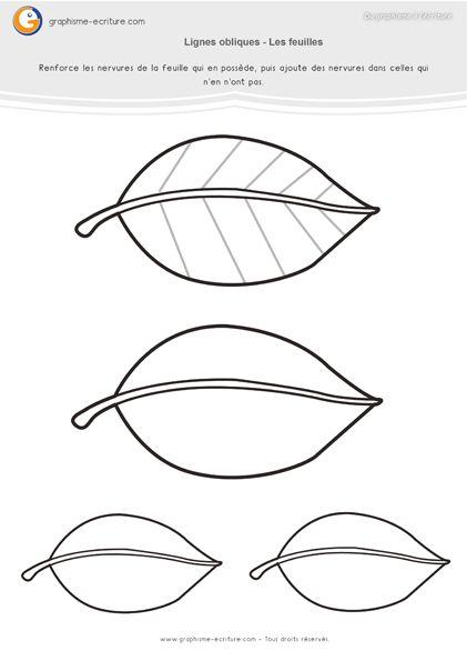 Graphisme MS Lignes obliques : Les nervures des feuilles