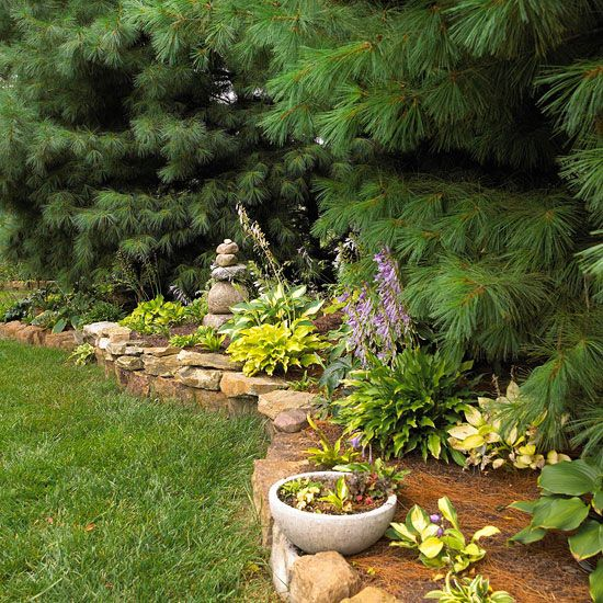 Garden Ideas Under Pine Trees : Best images about shade under pine trees on