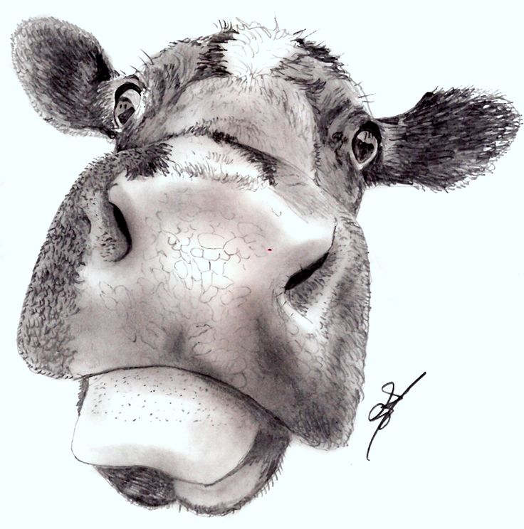 Mad Cow by jamesgray  This is a Pencil drawing of a Mad Cow i created just for fun, This is the Original Pencil Drawing