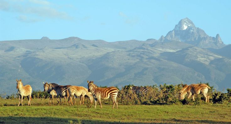 Irio as Made by Browns's Mom | Mt. Kenya Wildlife Conservancy