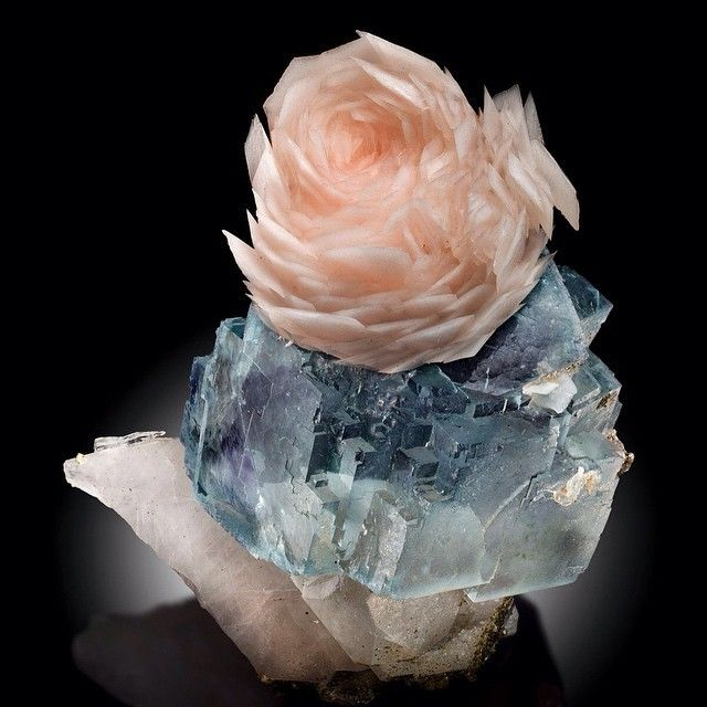 * Une fleur éternelle ... Calcite on Fluorite from Yaogangxian, China (specimen: Fine Mineral International, photography: James Elliott)