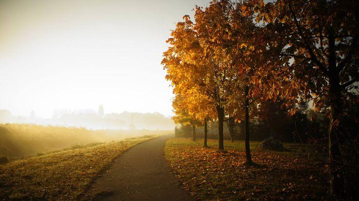 #wagrowiec #polska #poland #wielkopolska #wągrowiec #jesień #autumn #sunrise #trees  #skrzyżowanierzek Fot. Dariusz Antkowiak