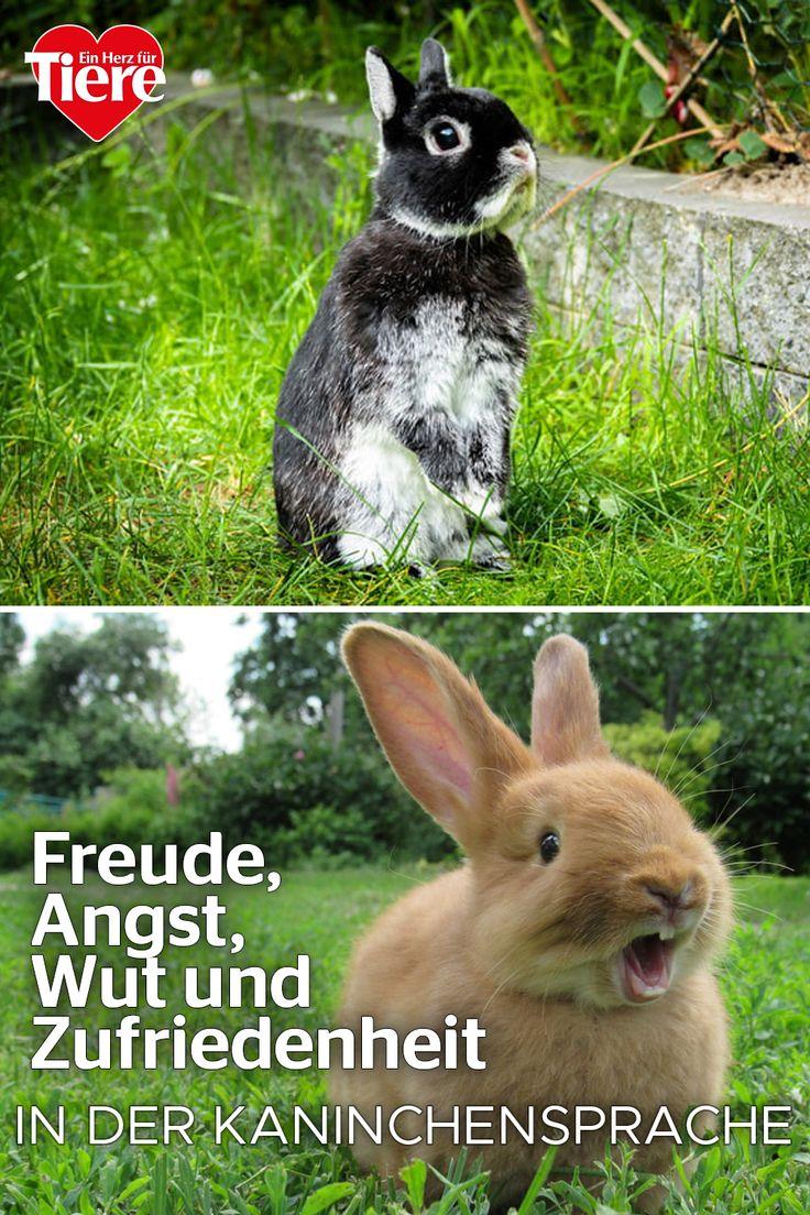 Das will dir dein Kaninchen mir seiner Körpersprache sagen ...