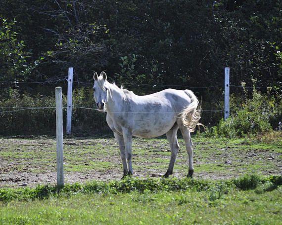 White Horse Photography White Horse Print Fine Art