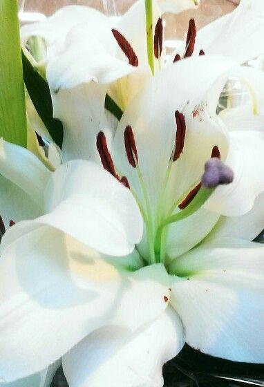 One of my fav lilliums.