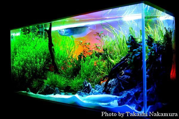 1000 images about aquariums fish tanks on pinterest for Narrow fish tank