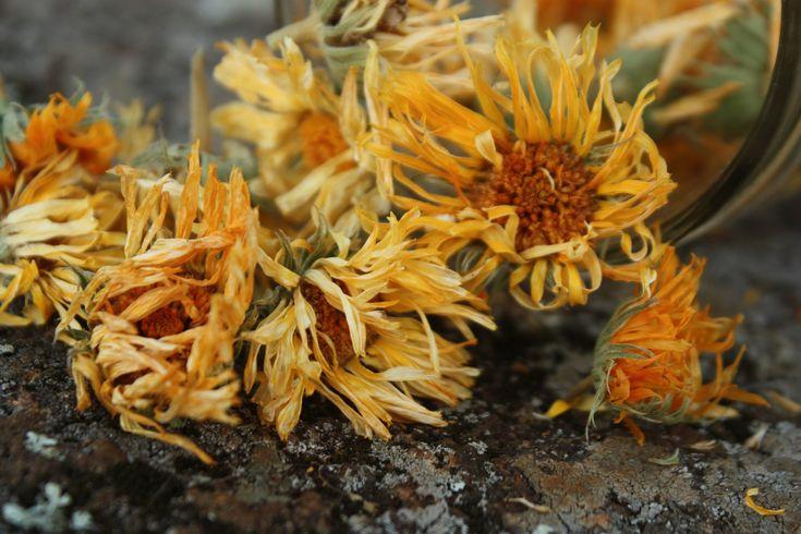 Calendula – A Natural Remedy for Irritated Eyes: Use cool calendula teabags or calendula eyewash (recipe at site)