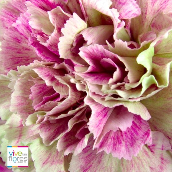 Atrevidos colores que sólo consigues en Vivelasflores.com. Aprovecha y comparte emociones y envía sonrisas con nuestras flores.