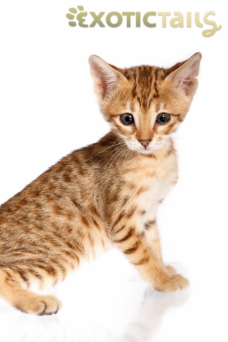 cat pee repellent home remedy