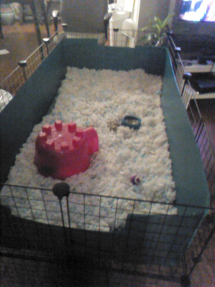 This is a 2x4 c cage i built for my daughter 39 s 2 guinea for Simple guinea pig cage