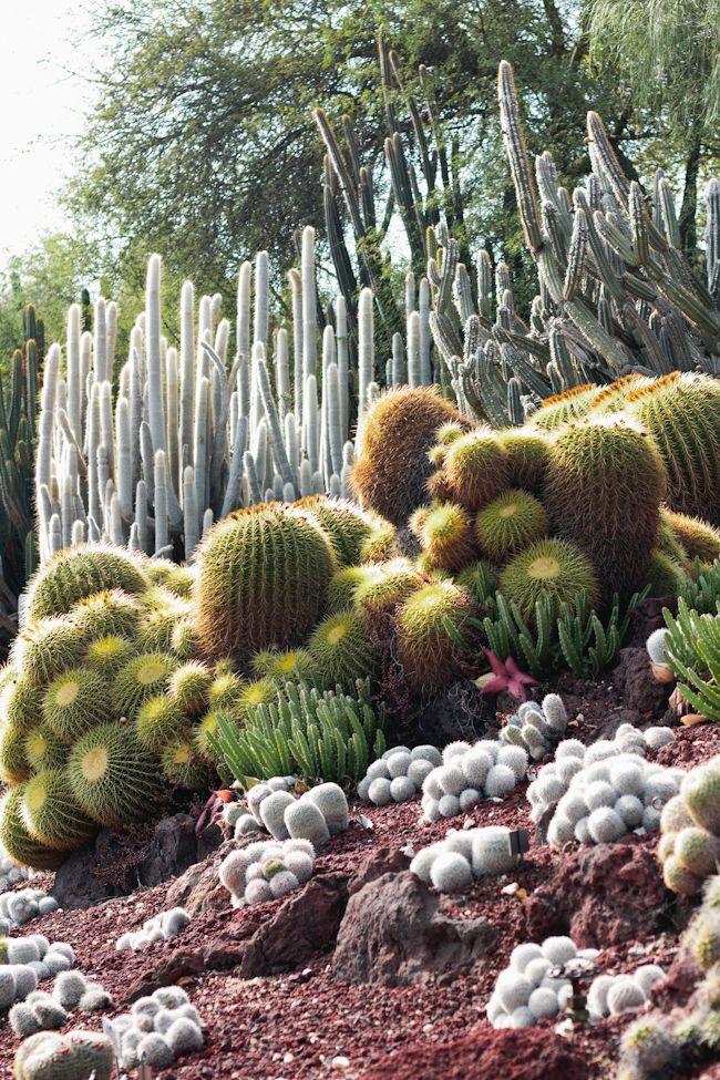 cacti at the huntington gardens via for me, for you