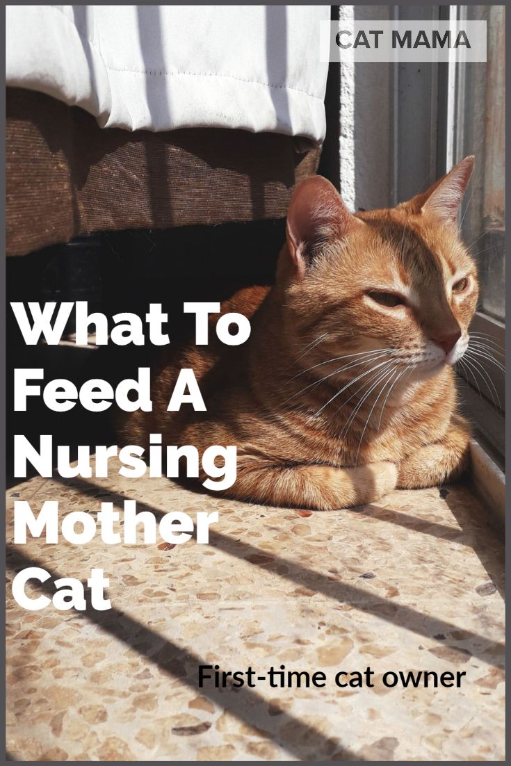 What To Feed A Nursing Mother Cat The Best Cat Food For Nursing Cats Nurse Cat Cats Best Cat Food