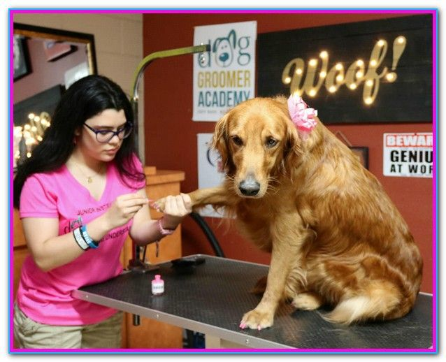 Dog Grooming Classes Near Me The Online Pet Grooming Courses Penn Foster Offers Prepares Students With The Skills They Need Dog Grooming Dog Groomers Groomer