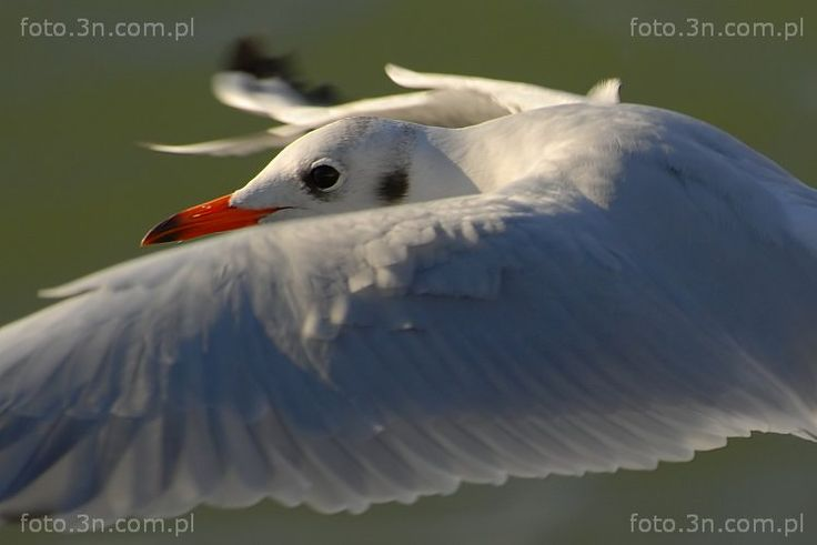 Sea birds (bird, seagull) photos. Online sale of photos for graphic projects, calendars, postcards, wallpapers, Internet, etc.