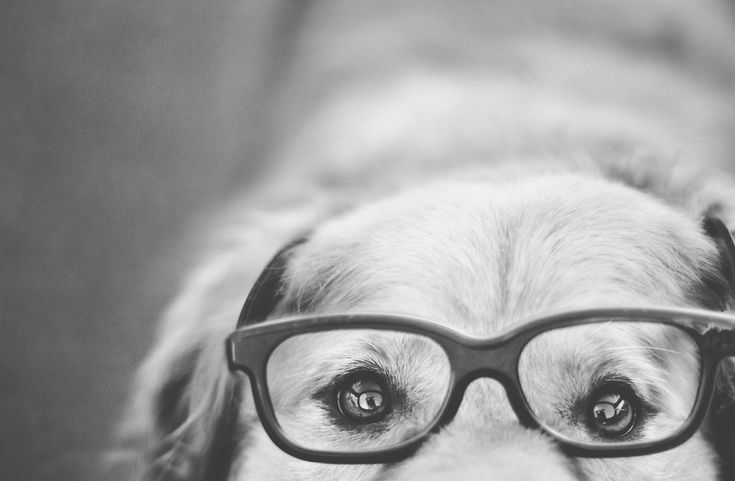 39 Dog Portraits That Will Take Your Breath Away