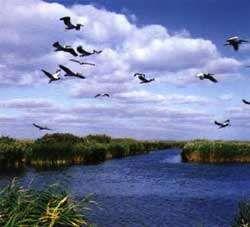 Danube Delta- Last Natural Paradise in Europe