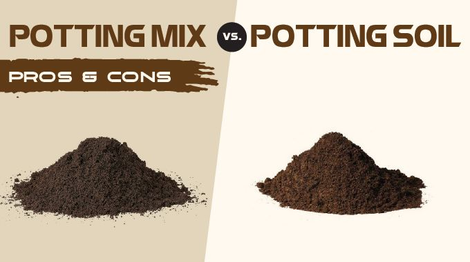 Potting Soil Vs Mix What S