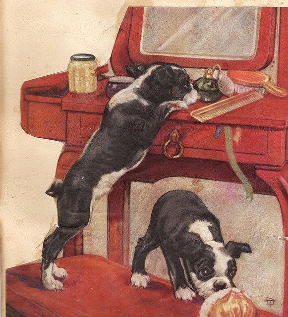 vintage boston terrier pups