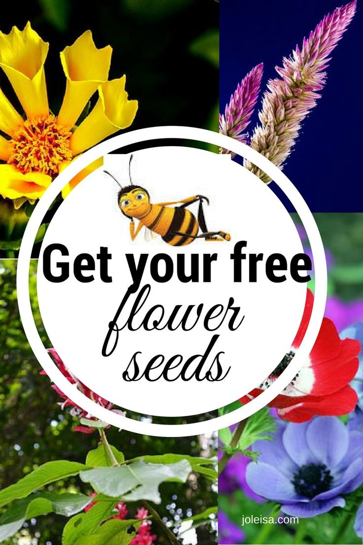 Plant your own wild flower garden with these free seeds