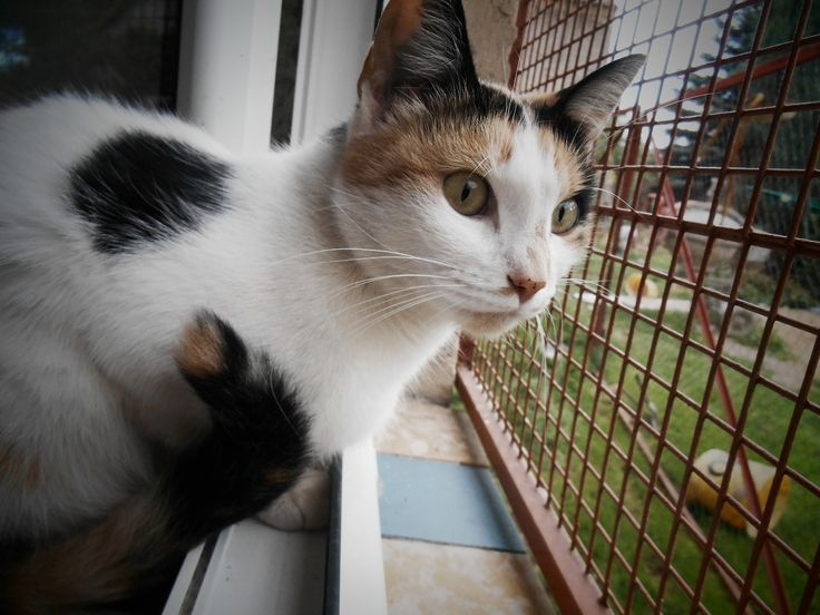 The village cat