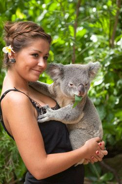 Must hold a koala before they go extinct or before I die. Whichever comes first. Must plan a trip to see @Kazz Pell