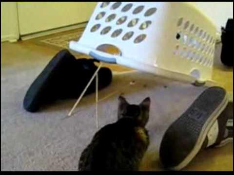 Trampa para gatos curiosos!