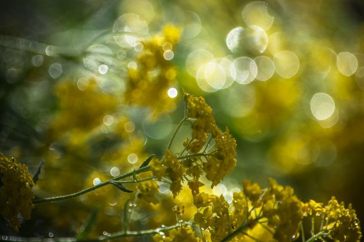 sun colors by Nikoletta Kolozs