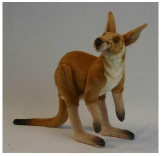 True-to-Life Male Kangaroo [ID 3488537]