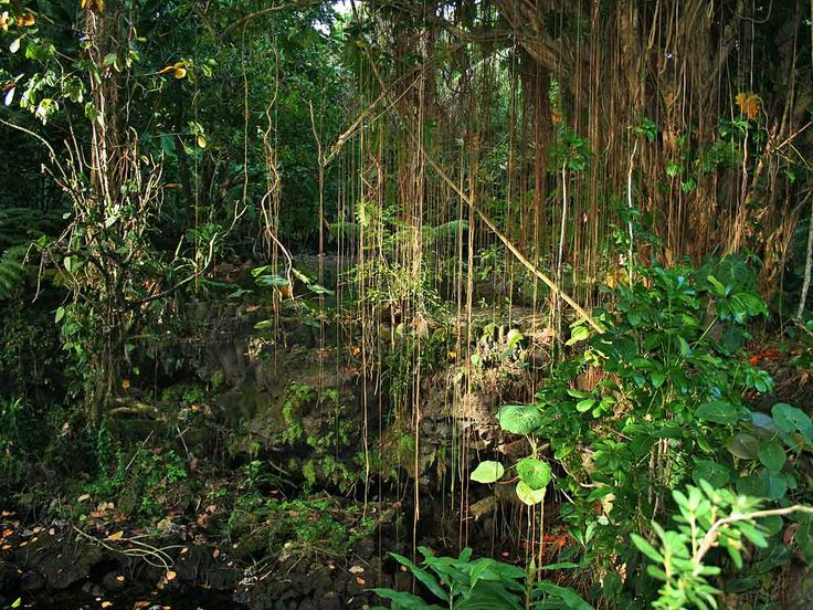 Jungle vines | YP Show for Imagine Watford | Pinterest ...
