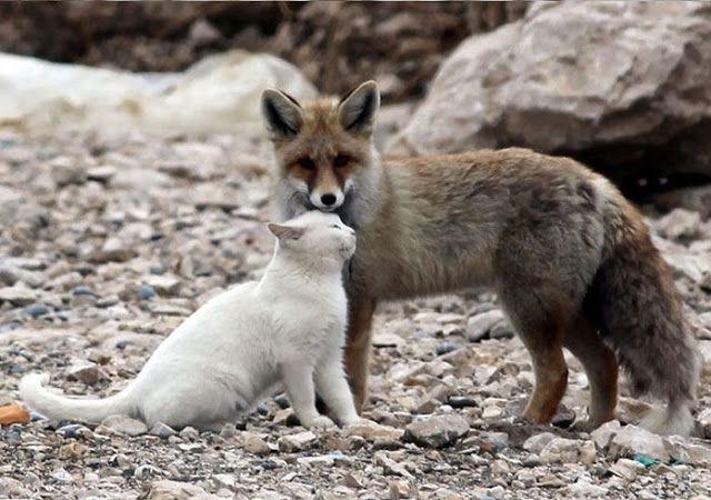 Μια απίθανη φιλία: Όταν τα ζώα μας μαθαίνουν τι σημαίνει φιλία