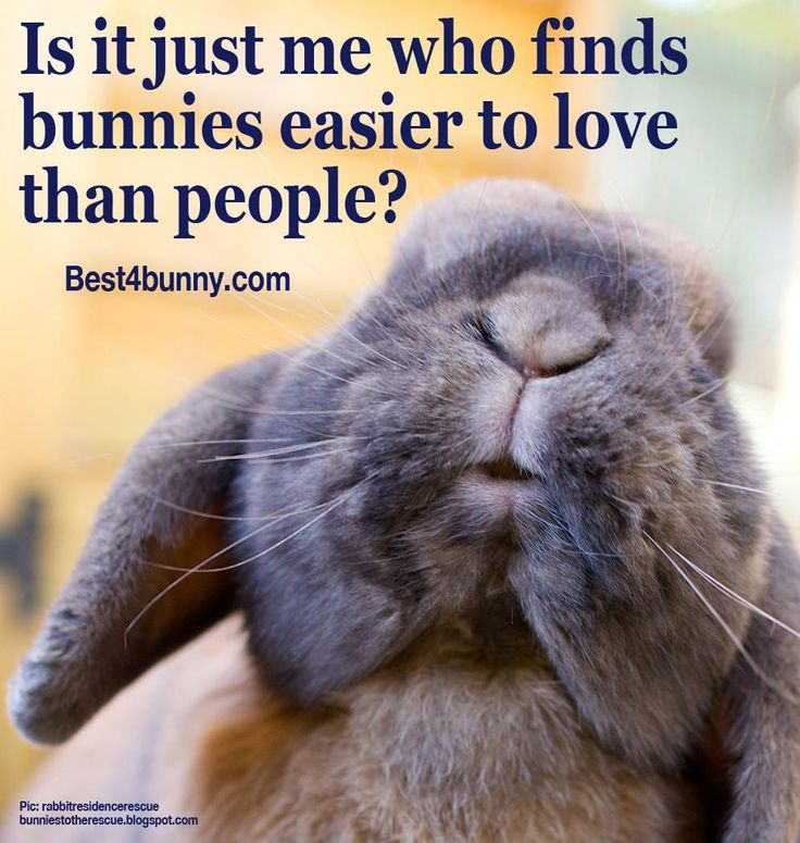 Who can relate? #Best4Bunny Best4bunny #Bunny #Cute #BunnyBox