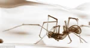 human spider hybrids