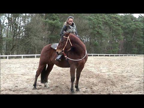 Prparer Un Cheval Astuces Vido Conseils European Horsemanship France Belgique