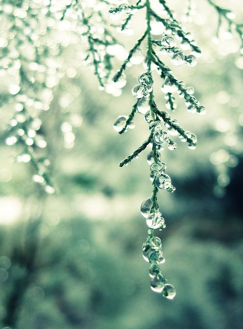 when the snow melts: Bokeh Photography, Winter White, Things Winter, Snowmelt Springawaken, Blog, Snow Melted, Christmas Mood, Beautiful Nature, Natural Trees