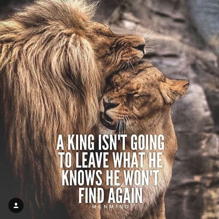 Lion King Love Quotes: Best 25+ King Queen Quotes Ideas On Pinterest