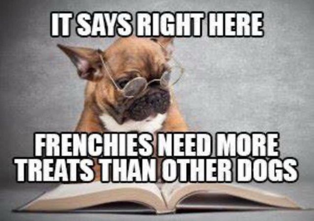 I Think Our Freddie Wrote This French Bulldog Funny French Bulldog Puppies Frenchie Bulldog