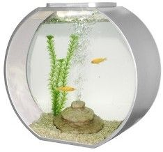 25 best ideas about round fish tank on pinterest for Vase aquarium rond