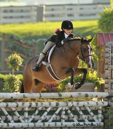 Longacre Maybelle - Welsh Cross - pony Hunter for sale on Bigeq.com