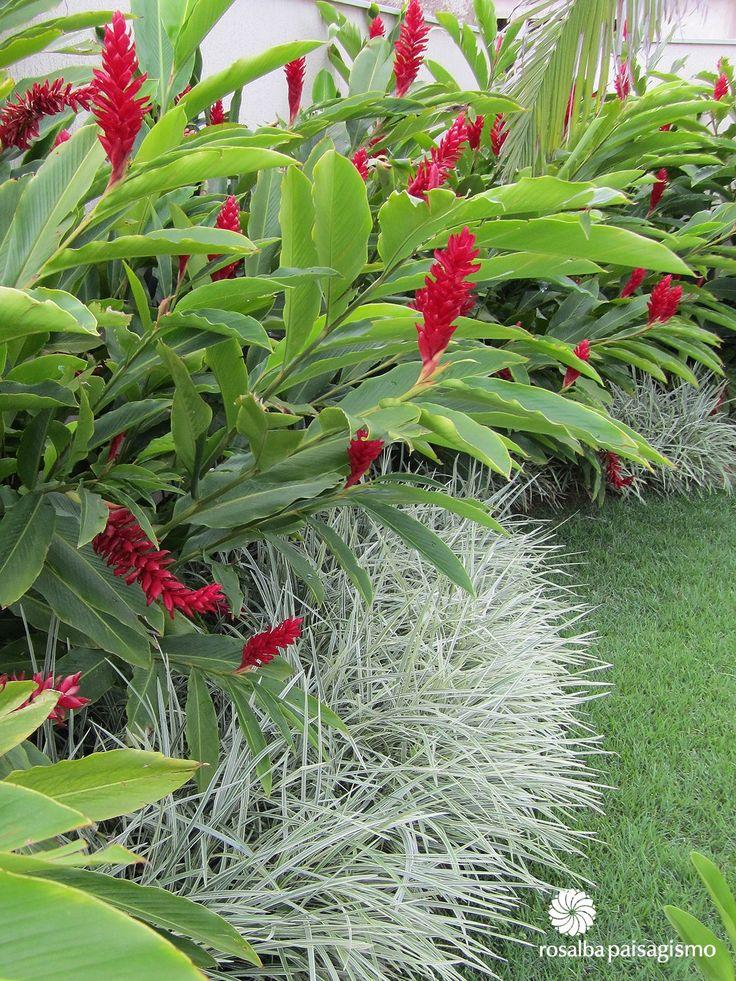Mesmo sendo mais resistentesa plantas ornamentais precisam de cautela na hora da manutenção