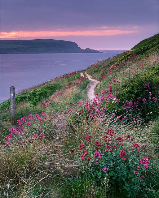 Stepper Point, North Cornwall on a calm hazy evening - stunning red valerian dotting up amongst the dunes.