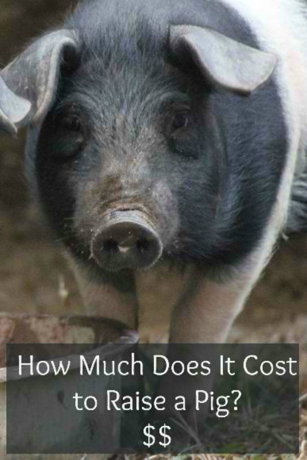 how much does it cost to have kitchen cabinets painted how much does it cost to raise a pig specific needs and 16712
