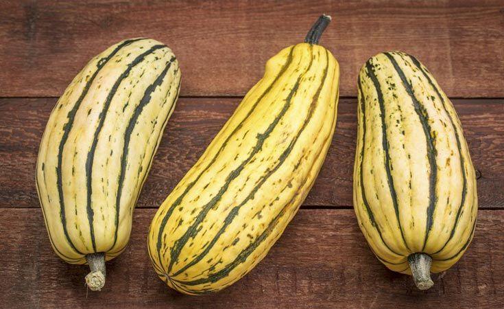 Facebook Twitter Google+ Pinterest La courge Delicata, que l'on connaît aussi sous le nom de courge Sweet potato, est une variété de couge d'hiver qui produit entre 6 et 10 fruits par pied. Sa taille est d'environ 6 à 8 cm de diamètre et de 15 à 20 cm de long. Sa chair est de couleur jaune, ayant un goût qui rappelle celui de la noisette ou du maïs, avec une texture douce et crémeuse. Contrairement aux courges de la même famille, celle-ci ne nécessite pas un épluchage. Elle se conserve…