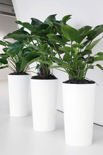 25 beste idee n over grote bloempotten op pinterest for Grote planten voor binnen