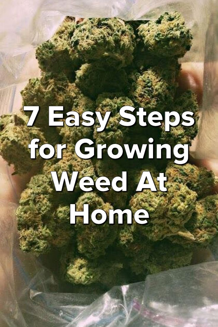 7 Easy Steps For Growing Weed At Home