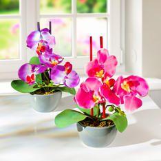 2 aranžmány Orchidea MAGNET