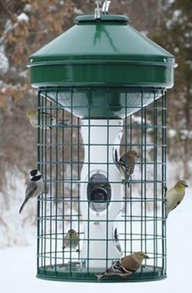 The 10 Best Bird Feeders for Your Wintertime Yard - Bob Vila