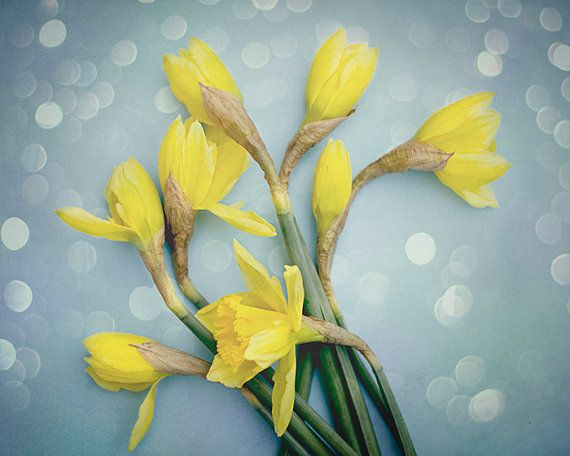 Daffodil Photography, Blue and Yellow Wall Decor, Spring Flower Wall Art, Floral Art Print, Modern Living Room Artwork, 8x10 Photograph