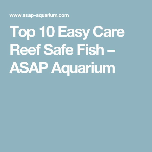 25 best ideas about reef safe fish on pinterest for Easy to take care of fish