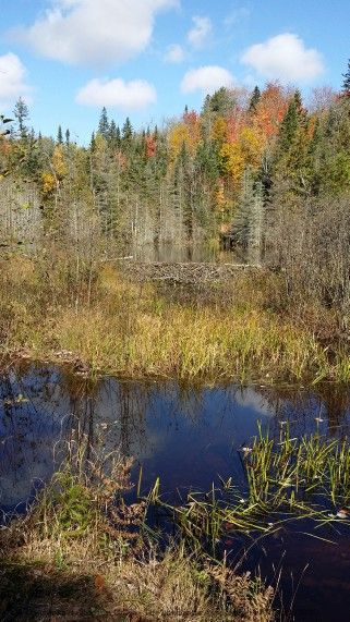 Offering for sale 520 (!) wooded acres with small river and beaver ponds located in Price twp just minutes west of Sault Ste Marie with long view on Lake Superior. Significant timber value ! There are 4 separately deeded parcels of land. On municipal year around road. Steps to Prince twp community centre. Property taxes $1,600. Asking price: $220k http://www.real-estate-ontario.ca/Listing/ViewListingDetails.aspx?ListingID=173718778
